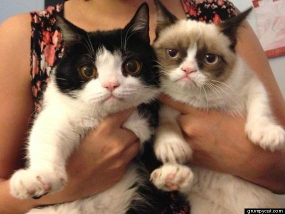 Grumpy Cat to be a Movie Star