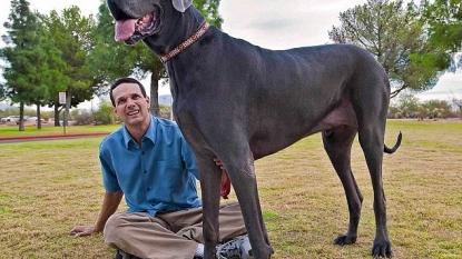 World's tallest dog died