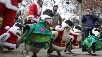 Christmas fever: Penguins dressed up like Santa and Christmas tree