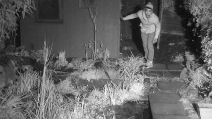Burglar captured in CCTV that was been fixed for capturing scenes of nocturnal urban wildlife