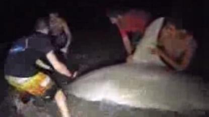 Fisherman caught a 14 ft big shark after ninety minutes battle