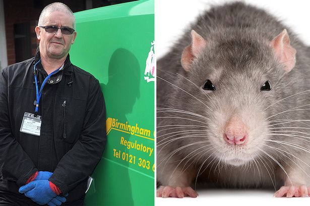 Giant rats are the new big problem of the city