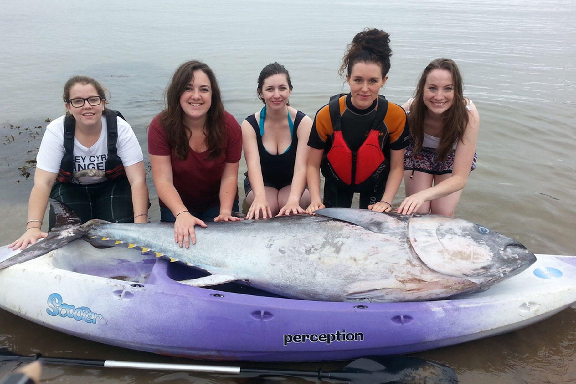 Group of friend found giant tuna fish worth million dollar for Giant tuna fish