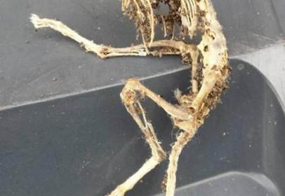 Man found a skeleton that looked like an alien under kitchen cupboard