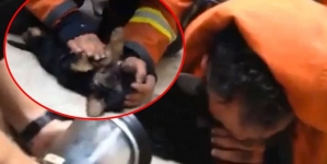 Incredible moment when a fireman gave mouth-to-mouth to save a dog