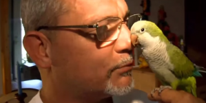 Man was to die because of his pet parrot