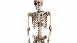 School is thinking to bury the skeleton which they are using since 40 years