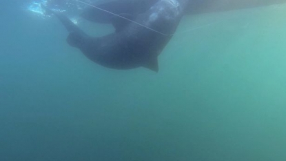 Angler broke the world record of catching the heaviest fish on a rod