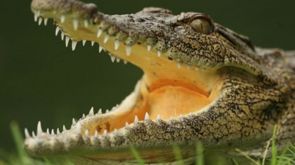Fisherman killed the 20ft crocodile which killed his pregnant wife
