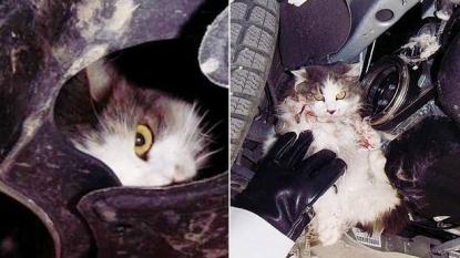 Mechanic found a live cat stuck inside the car's engine