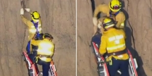 Dog trapped inside cliff successfully rescued by firefighters