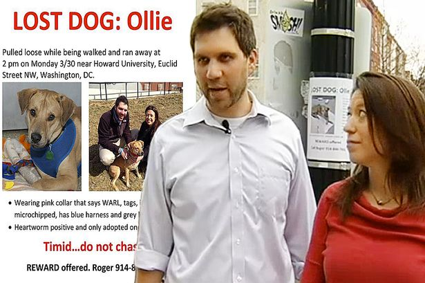 Dog owner got threatened with $750,000 fine for putting posters to find missing pet