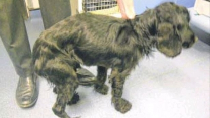 Owner refused to pay for surgery after her dog ate an umbrella