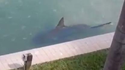 Residents left terrified after spotting a huge shark near their home beach