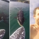 Terrifying moment when surfer saw killer whale under his paddle