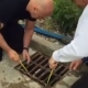 Salesman is being called 'hero' after he saved 11 ducklings stuck in a drain