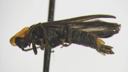 UCR Student Discovers New Species Of Firefly Near Topanga