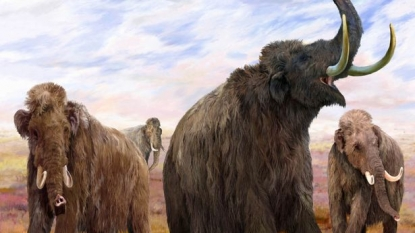 Genetic Analysis reveals how Woolly Mammoths survived Extreme Climatic