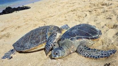 Man Arrested For Allegedly Shooting Turtle Rescue Volunteer