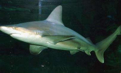 Surfer seriously injured in Australian shark attack