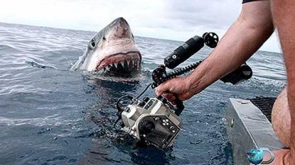 ICYMI: Shark Week Returns Sunday | Gulfport, FL Patch