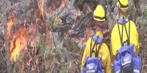 Australia, New Zealand firefighters head to US to battle blazes