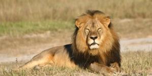 Lion-Killing Dentist's Holiday Home Vandalised