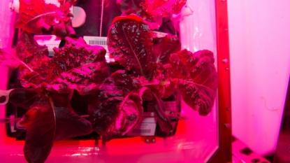 Madison-based company celebrates success of space lettuce