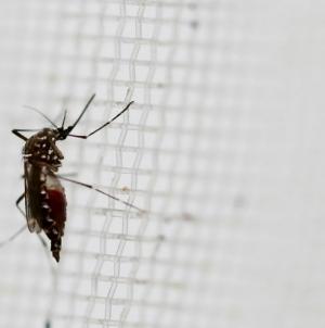 Governor Scott urging Florida to prepare for Zika virus