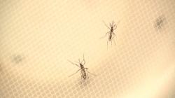 Zika Virus confirmed in Nebraska