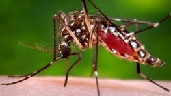 US CDC sees potential widespread Zika virus in Puerto Rico