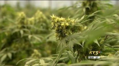 Leonard: Sessions needs to 'back off' on marijuana